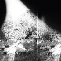Godspeed You ! black Emperor - Asunder, Sweet and Other Distress